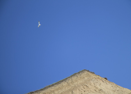 The sea gull flying in the blue sunny sky over the sand clay soil breakage. Minimalism and freedom simbol. No people 스톡 콘텐츠