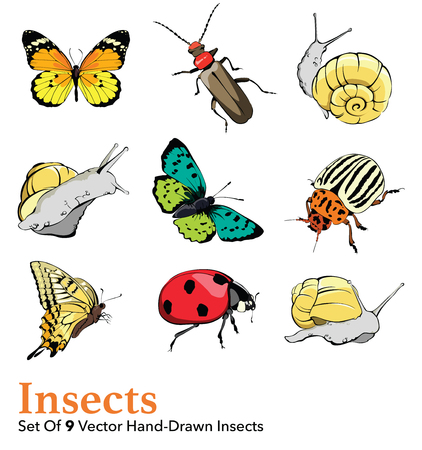 Butterfly, snail, ladybug, potato bug. Insects 9 Elements Set Seamless Pattern graphic design Illustration