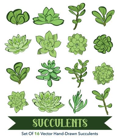 Senecio, Aeonium, Echeveria, Graptopetalum, Sedum. Succulents Hand Drawn 16 Set Seamless Pattern graphic design