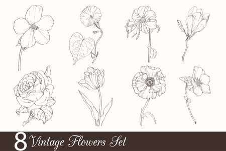 compilation: Vector Set of 8 Vintage Drawing Flowers With Tulip, Poppy, Iris, Rose, Magnolia, In Classic Retro Style. Chocolate brown and beige colors.