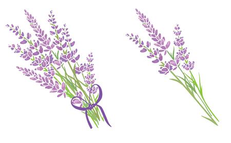 Set of two purple lavender flowers bouquets. Beautiful violet lavender flowers collection. Graphic design elements.