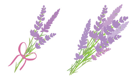 Set of two vector lavender flowers bouquets. Beautiful violet lavender flowers collection. Graphic design elements.