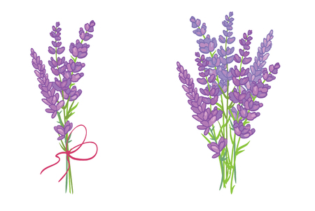 Set of two adorable lavender flowers bouquets. Beautiful violet lavender flowers collection. Graphic design elements.