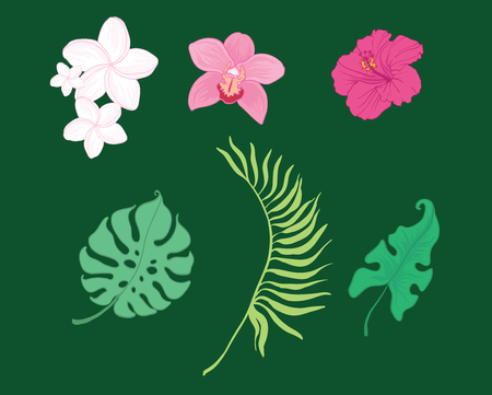 Set of vector tropical flowers and leaves. Great for summer party invitations,packaging, scrapbooking design projects. Surface pattern design.