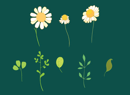 Set of vector daisy flowers and leaves. Great for spring and summer party invitations,packaging, scrapbooking design projects. Surface pattern design.