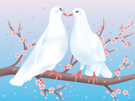 Two white pigeons sitting on the Cherry blossom and looking at each other with affection.  Vector