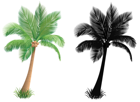 coconuts: Palm tree and a silhouette of a palm tree.