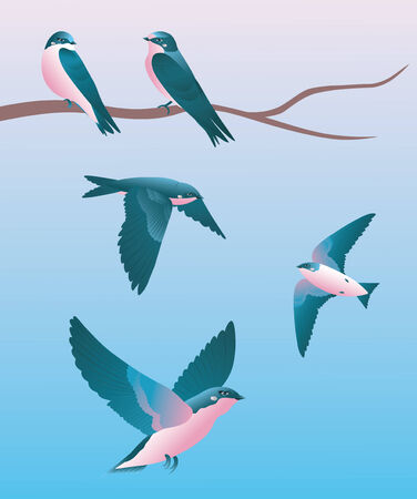 migrating birds: Two swallow sitting on a branch and flirting.  Three swallows flying nearby. Illustration