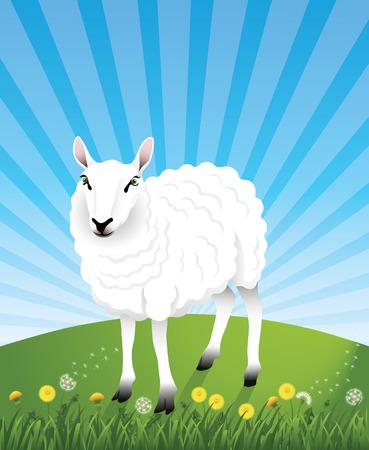 ovejas bebes: Cute ovejas blancas en la colina. Dientes de León y hierba en el primer plano.