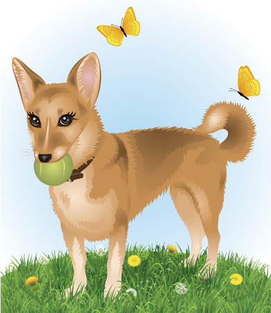 Cute dog standing in the grass and holding a tennis ball in the mouth.  Vector