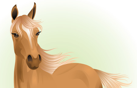 light brown horse: Portrait of a young brown horse.