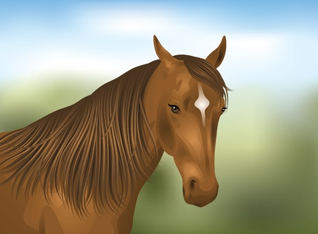 Portrait of a brown horse.
