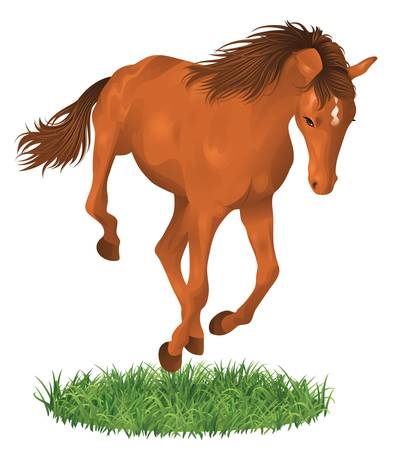 foal: Isolated jumping horse.