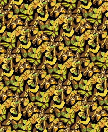 mariposas amarillas: Muchas mariposas