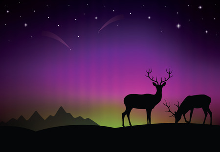 northern lights: The aurora with a deers in the foreground.
