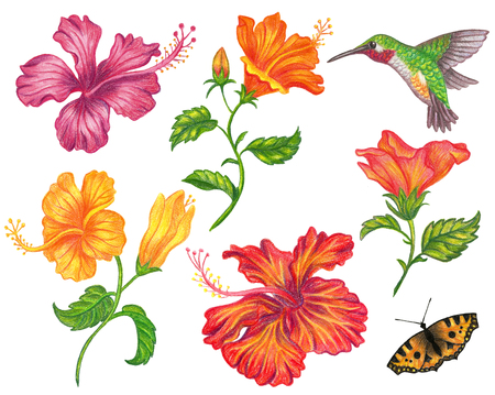 Set of hibiscus flower with hummingbird and butterfly.