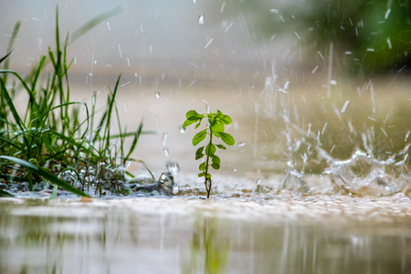 Close up of a green plant while it is raining. Banco de Imagens - 81777460