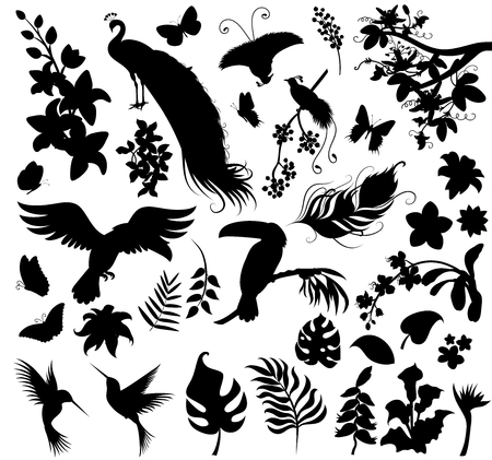 Set  of silhouettes of tropical plants and birds.