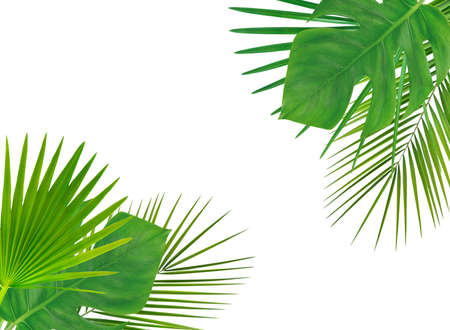Frame with green tropical leaves. Isolated on white. Beautiful nature background.