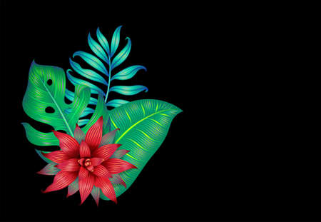 Different tropical leaves and a bromelia flower isolated on black.
