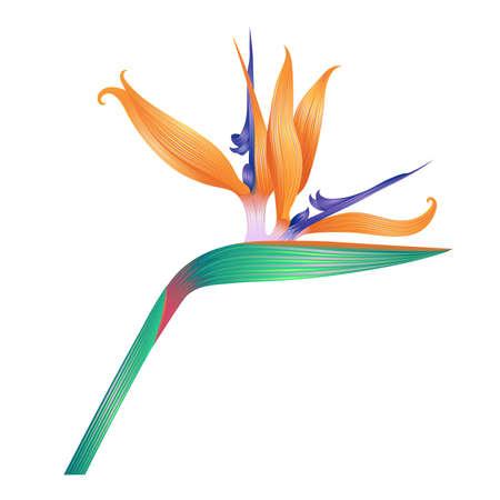 Beautiful flower isolated on white. Vector illustration.