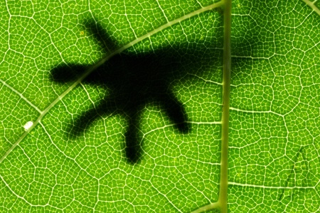 Leaf with small hand of lizard shadow