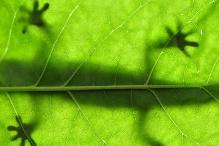 Lizard on Leaf photo