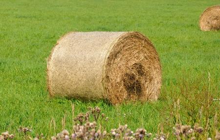 Straw balles on farmland  Stock Photo - 10437481