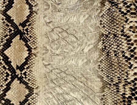 Snake skin texture photo
