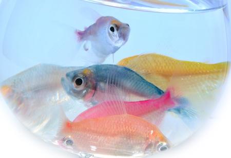 aquarium fish Stock Photo - 10639740