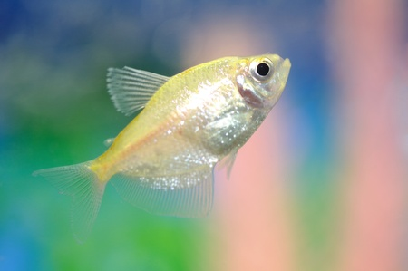 aquarium fish Stock Photo - 10750673
