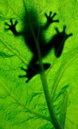 Frog resting on a leaf photo