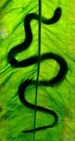 serpiente cobra: Serpiente