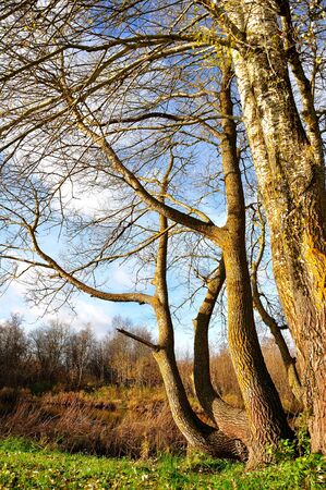 Old trees  photo