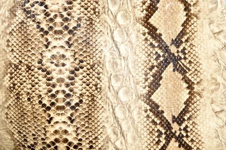 Snake skin, reptile Stock Photo - 11792874
