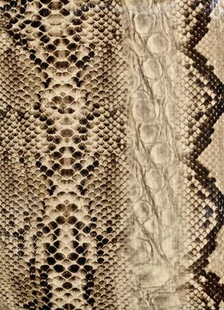 Natter: Schlangenhaut, Reptil