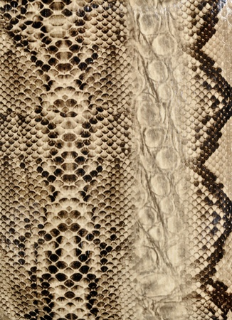 python: Snake skin, reptile Stock Photo