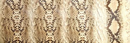 Snake skin, reptile  photo