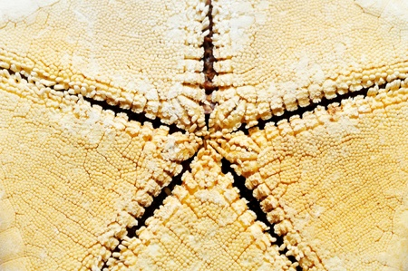 Sea star  photo