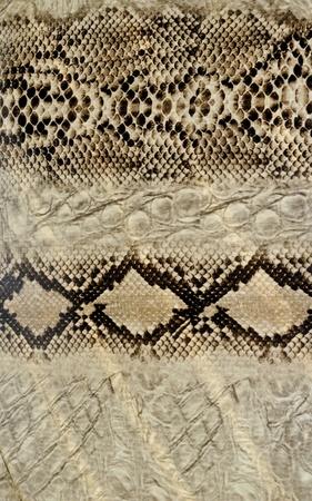 Snake skin, reptile Stock Photo - 12805069