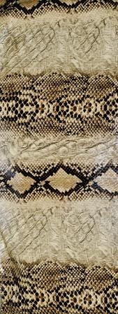Snake skin, reptile Stock Photo