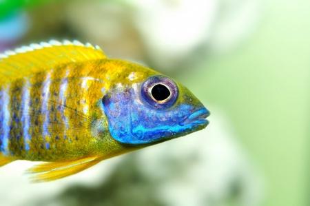 pez pecera: Acuario de peces