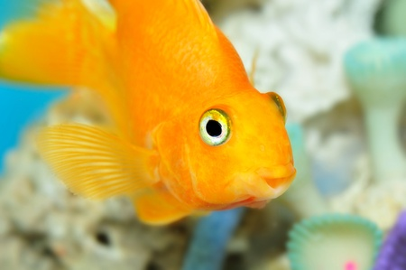 Parrot fish Stock Photo - 12969150