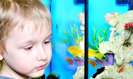 A boy watches fish in aquarium