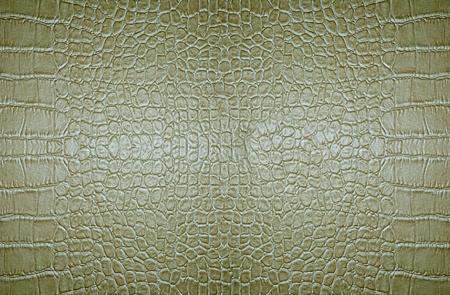 Crocodile skin texture background Stock Photo