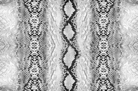 Snake skin, reptile