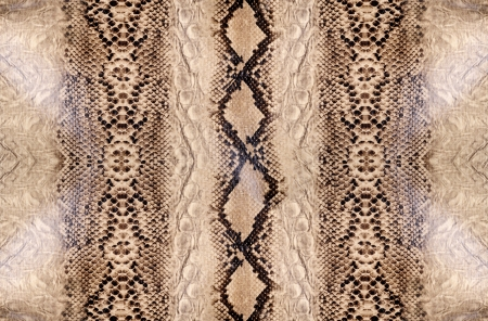snake: Snake skin, reptile
