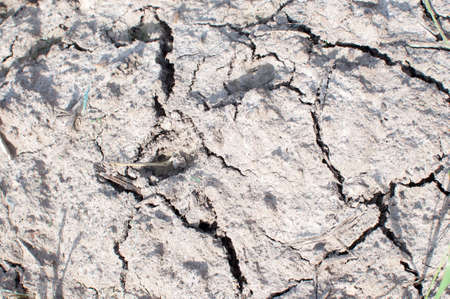 Closeup of dry soil. Cracked ground background.