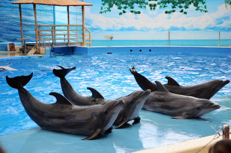 Beautiful cute dolphins pose in pool water in dolphinarium.