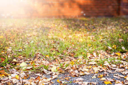 Blurred Autumn sunny natural background of fallen leaves. High quality photo